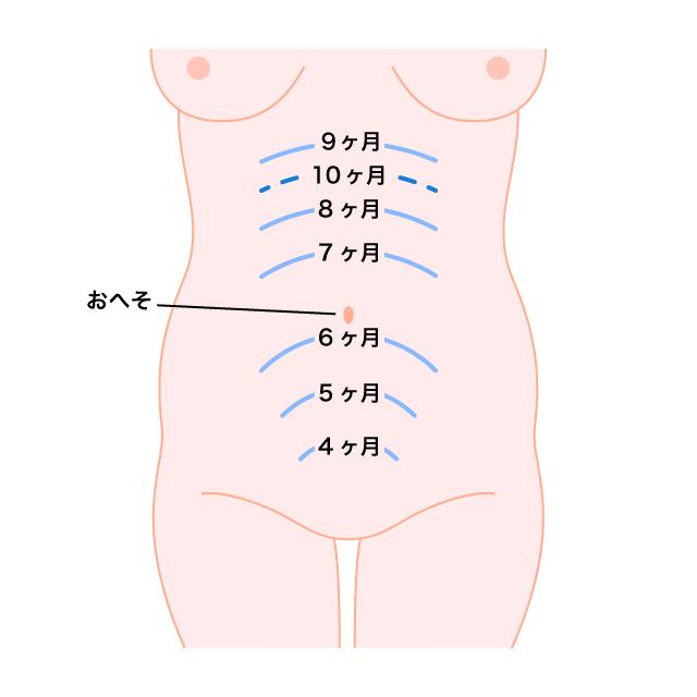 3 お腹 妊娠 ヶ月